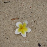 flower (smells gooood)
